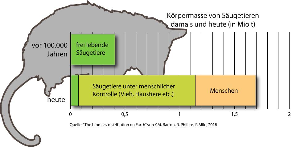 Biomasse damals & heute